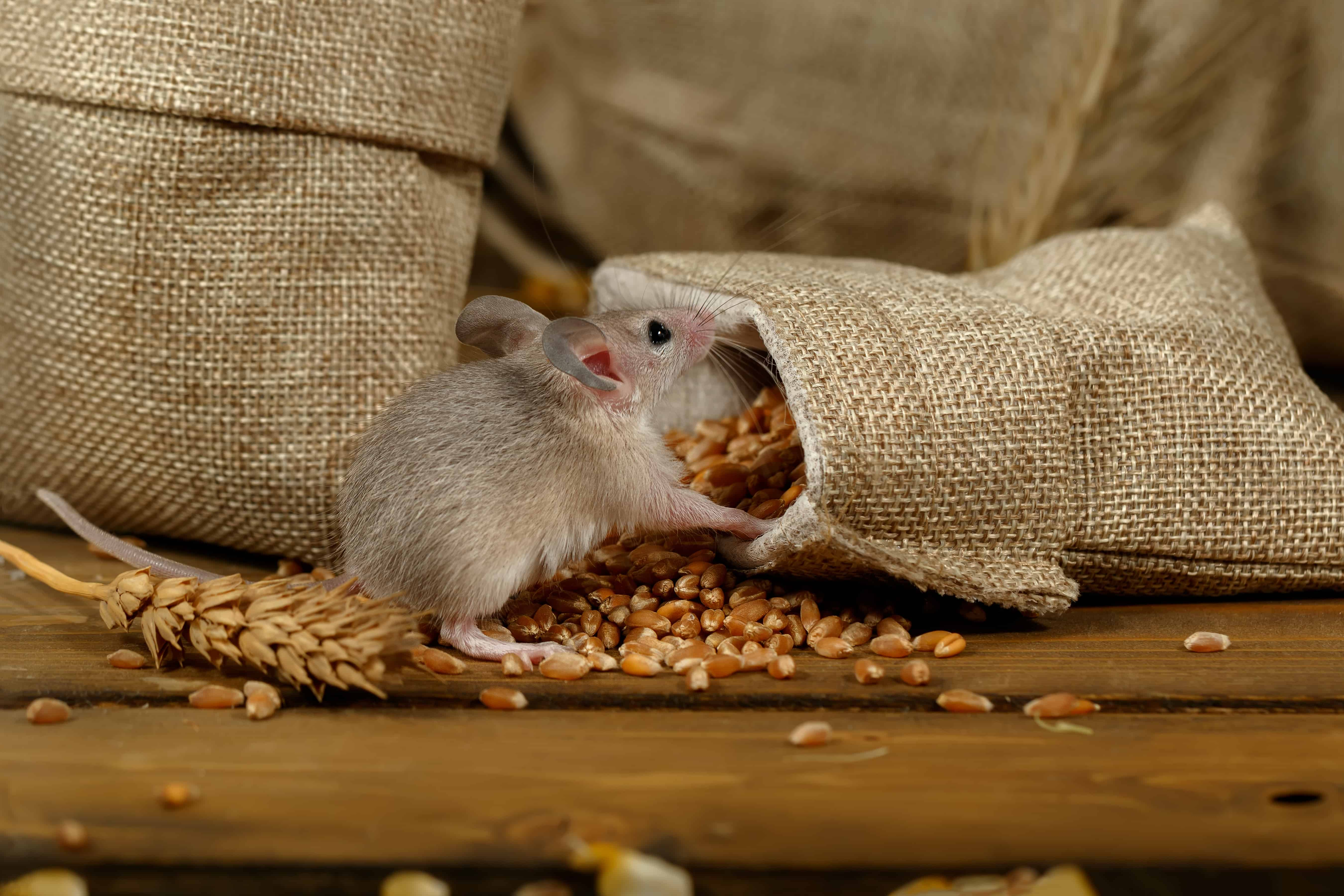 Rodent Control on Farms (Lantra)